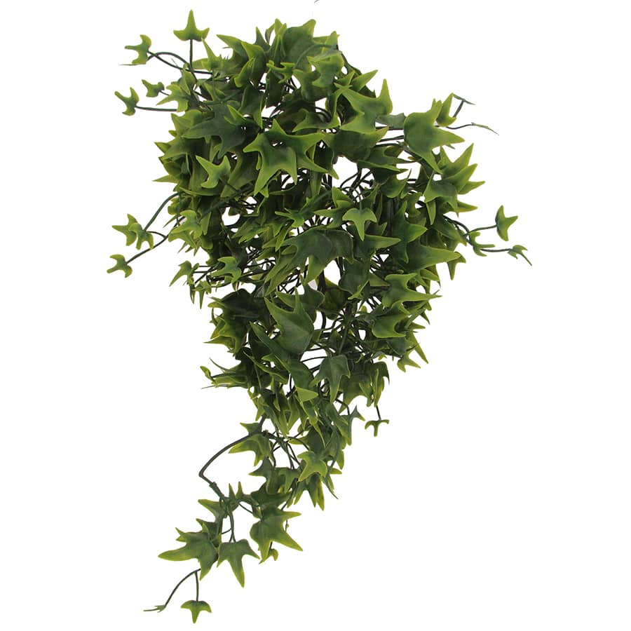 Lucky Reptile hanging plant ivy