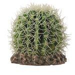 Hobby Cactus Sonora