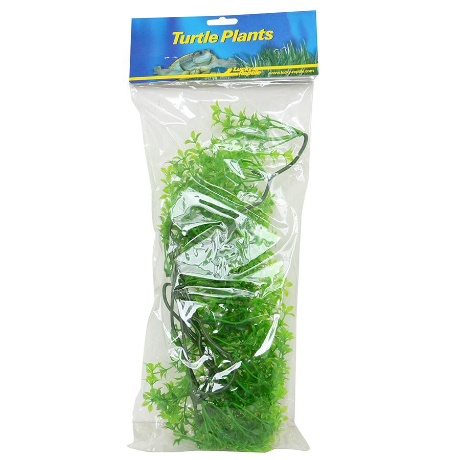 Lucky Reptile Turtle Plant Ceratopteris