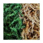 Dragon Natural Green Sphagnum Moss